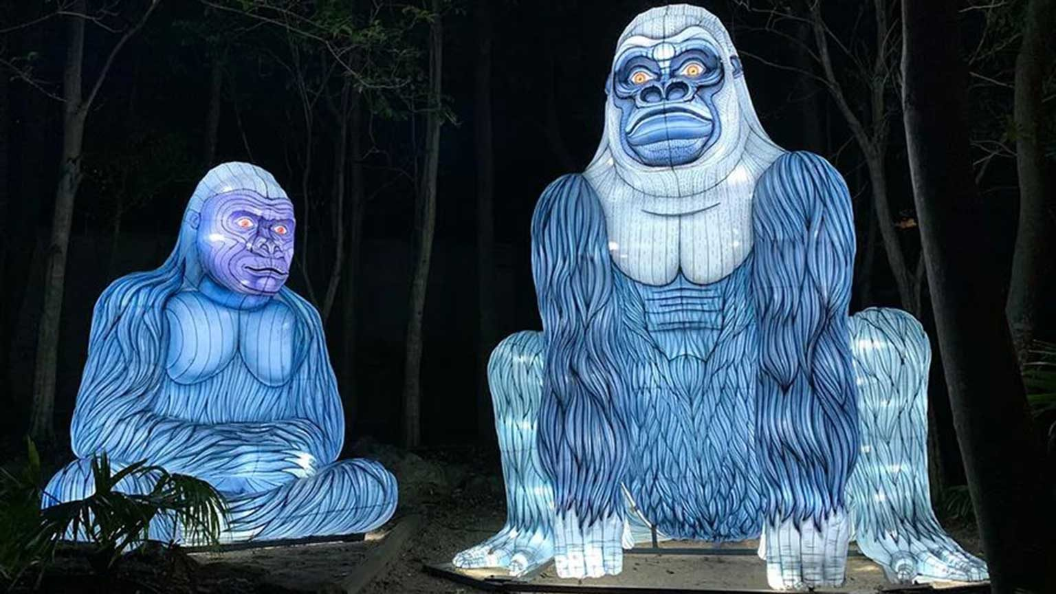 Gorillas at Vivid Sydney, Taronga Zoo.