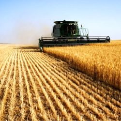 Agriculture Online Courses Shutterstock