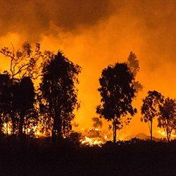 Bushfire_GettyImages_250x250