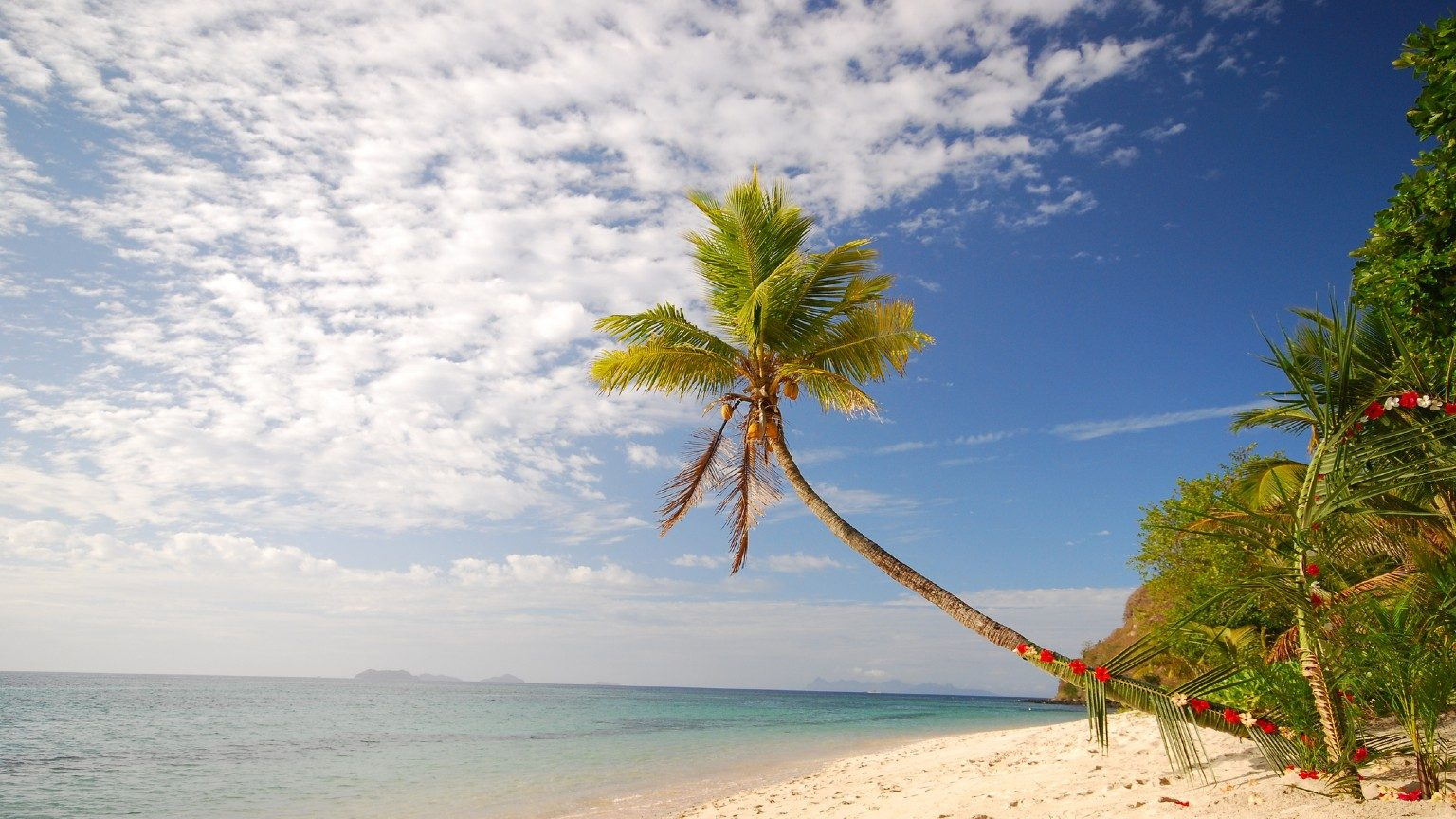 Palm tree on beach in fiji