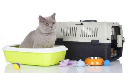 Top sites to buy pet supplies online