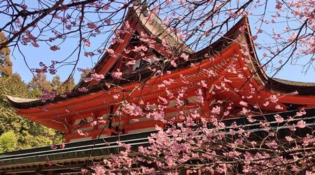 Latest Tokyo holiday deals