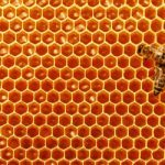 shutterstock bee honey hive 450x250