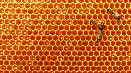 IOTA launches Pollen update: End of an era, start of another