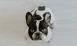 Best Pet Insurance Australia Our 2020 Top Picks