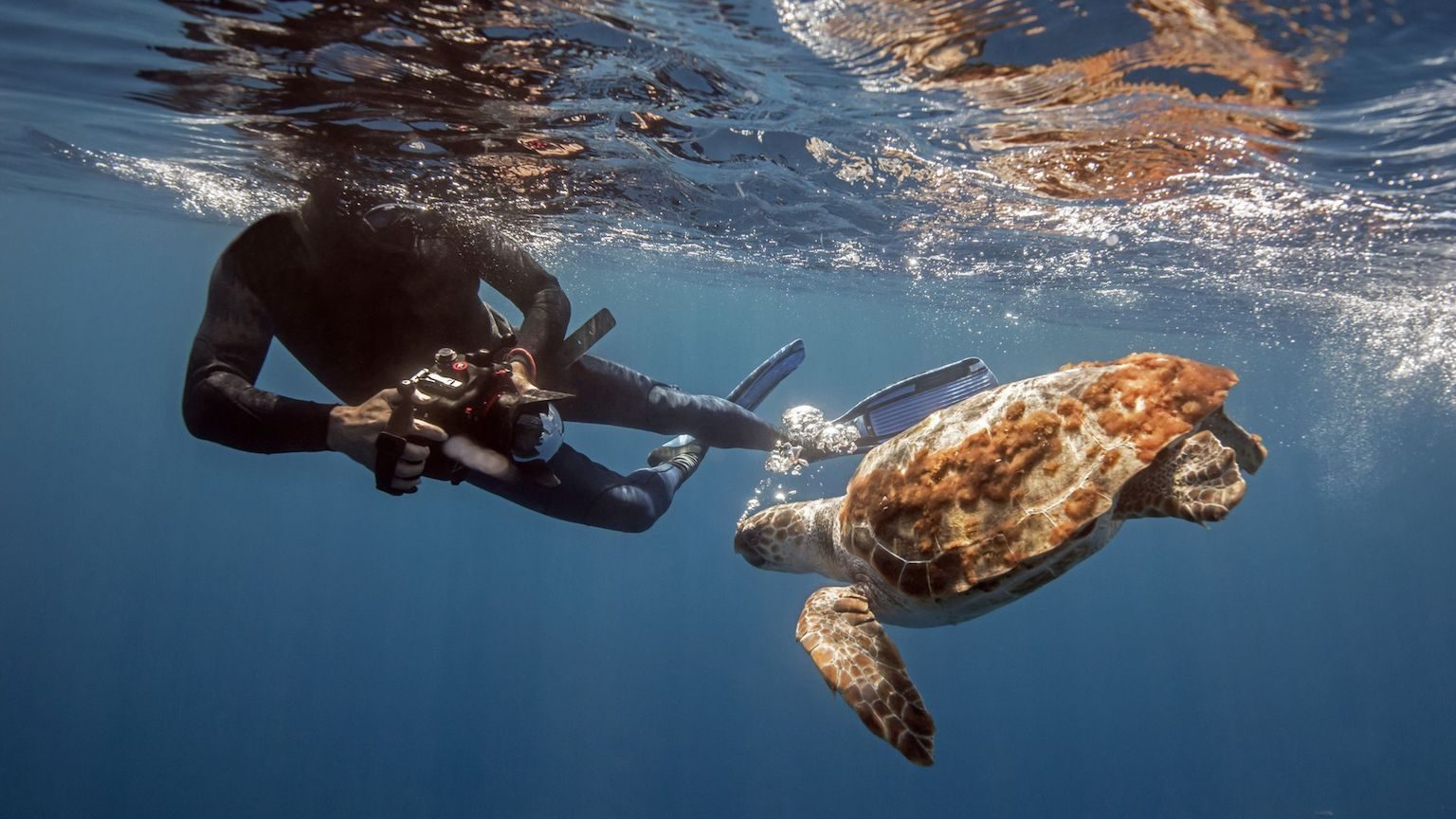 A scuba diver taking a photo of a turtle