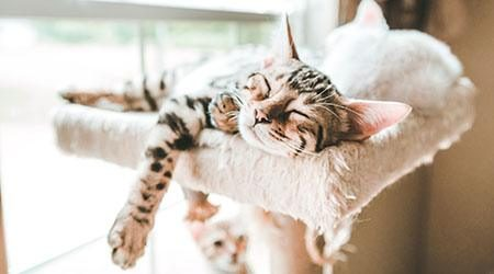 Carefree_Cat_GettyImages_450x250
