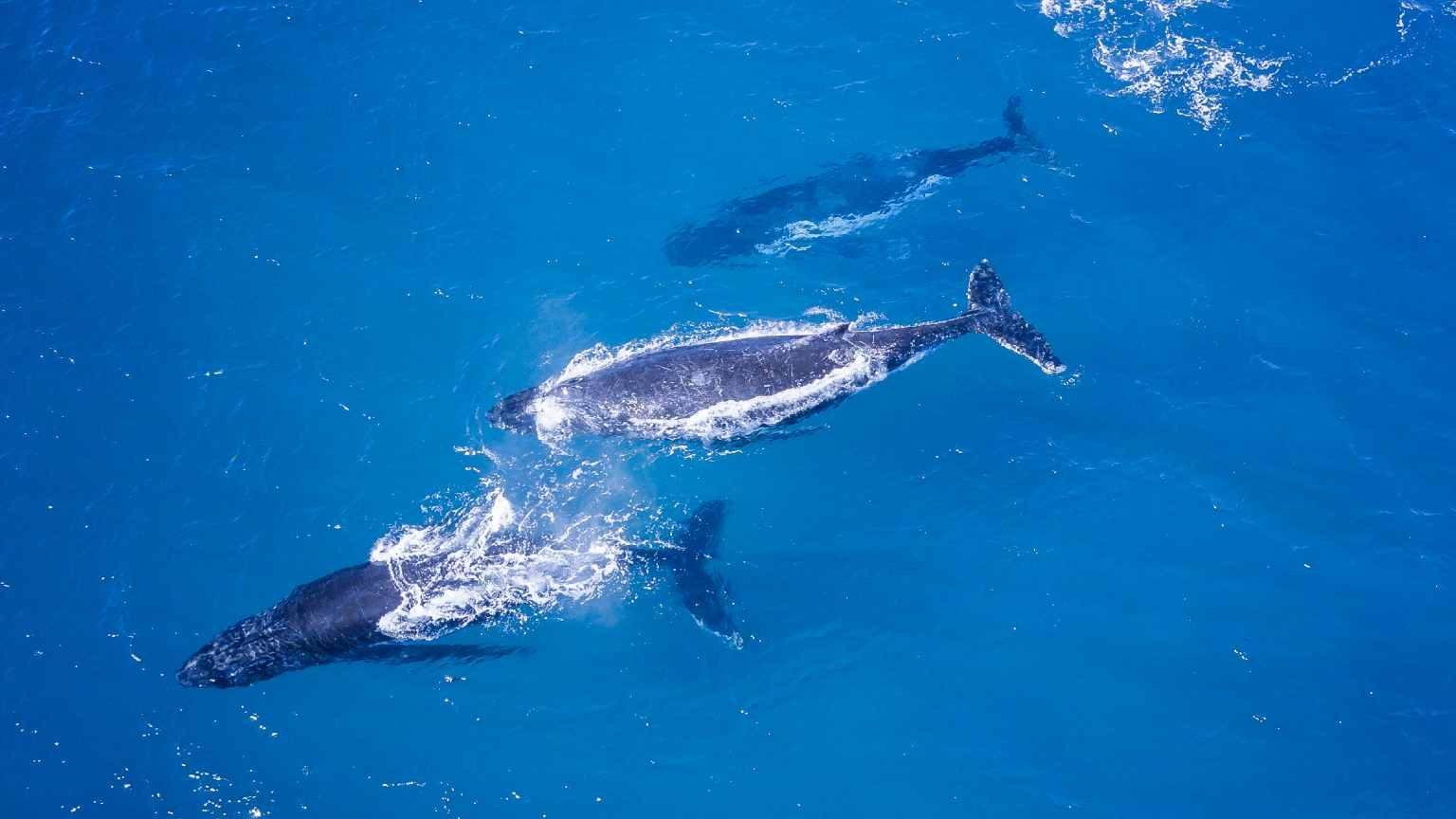 whale perth