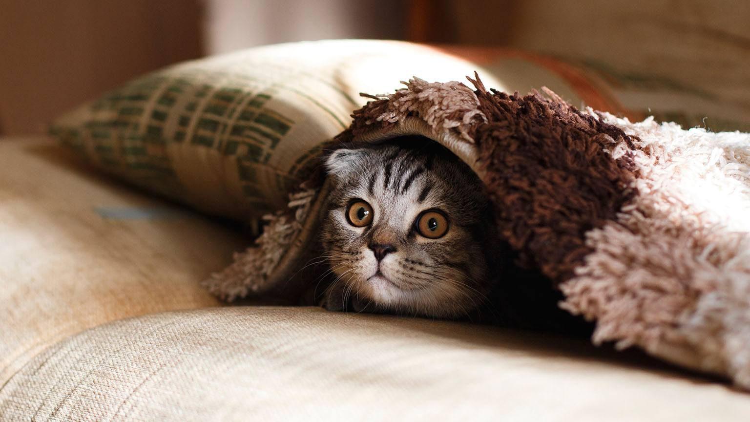 Cat under mat
