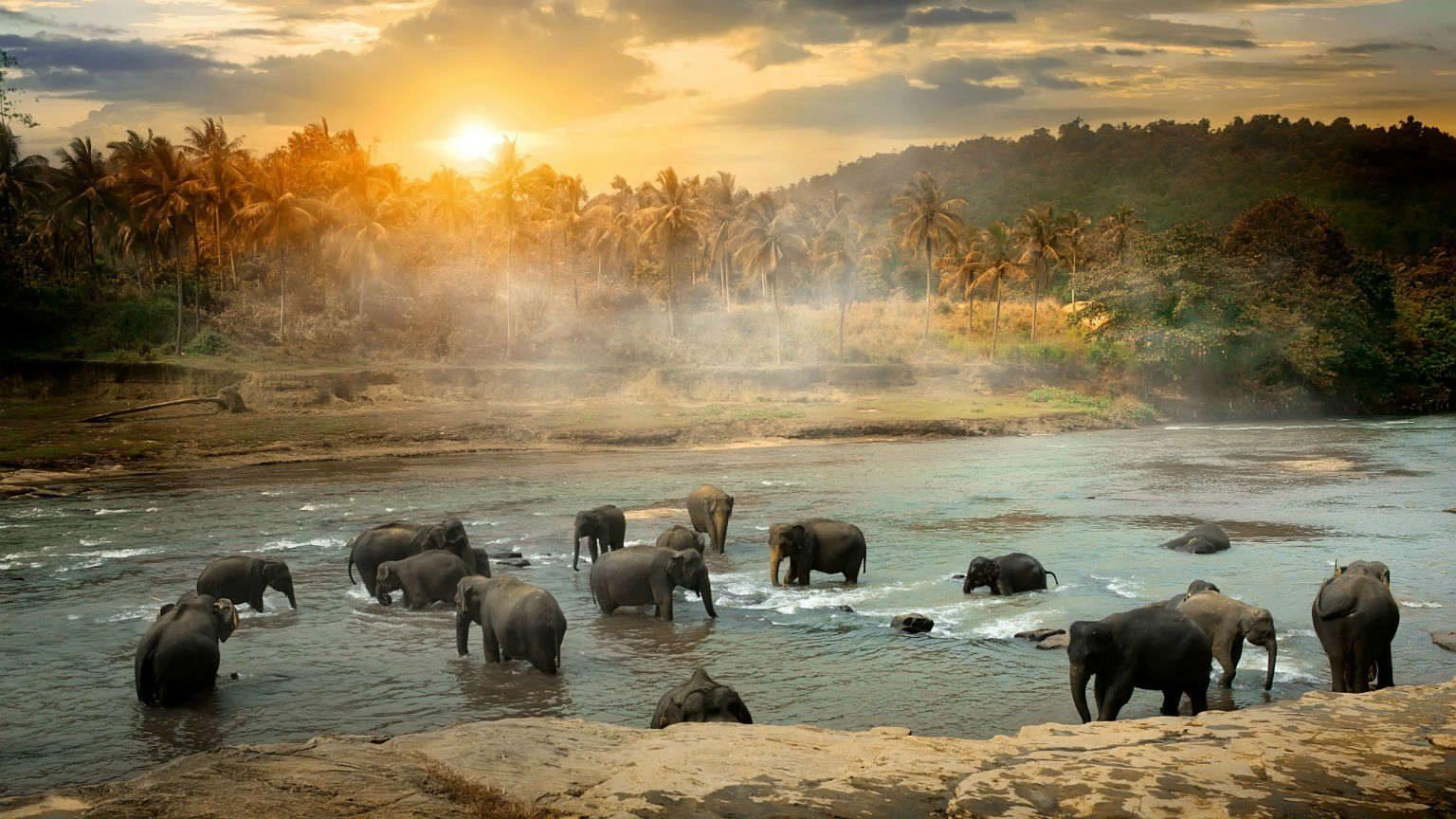 Elephants in the jungle Sri Lanka