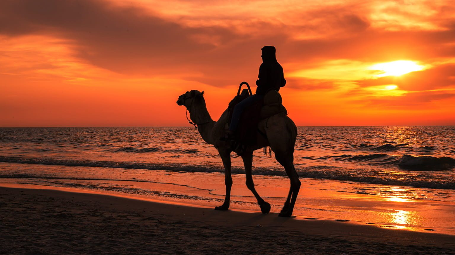 A Silhouette photo of Man Riding Camel At Sunset, Gaza beach