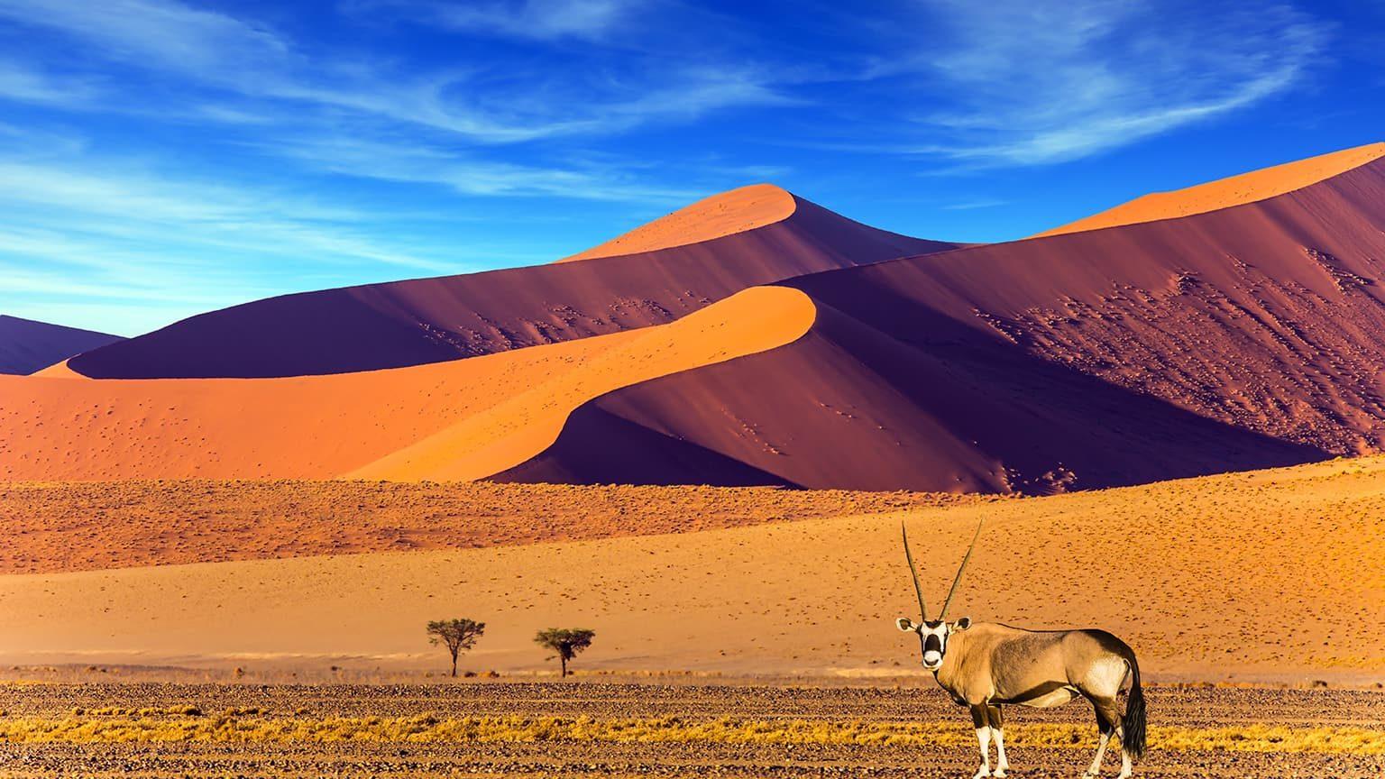 Oryx standing at the road, Namib Desert