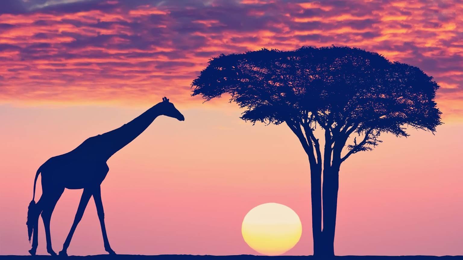 Serengeti Park Tanzania