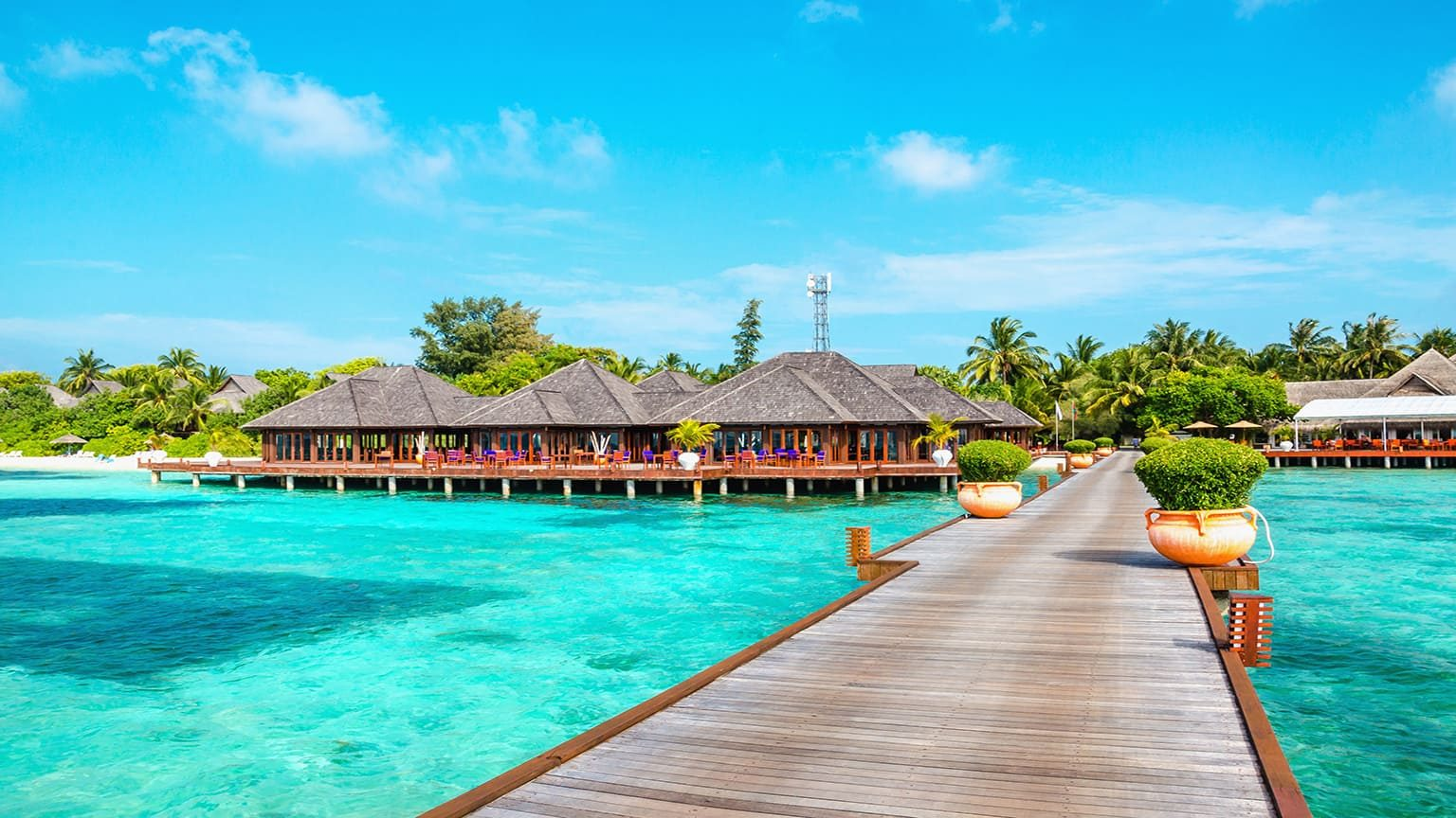 Wooden pier with tall palm trees, Maldives