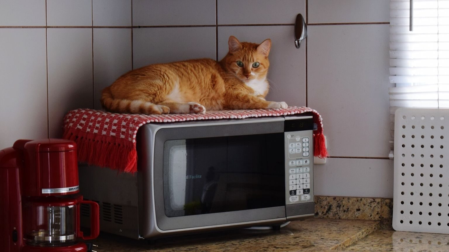Cat sitting on a microwave