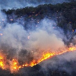 Forest_Fire1_GettyImages_250x250