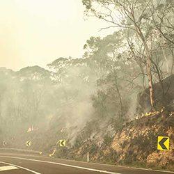 NSW_Bushfire_GettyImages_250x250