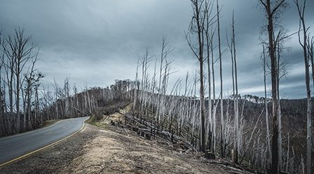 Ravaged_Trees_GettyImages_450x250