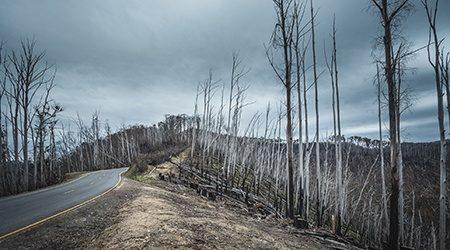 Australian bushfires: How domestic travel insurance can help