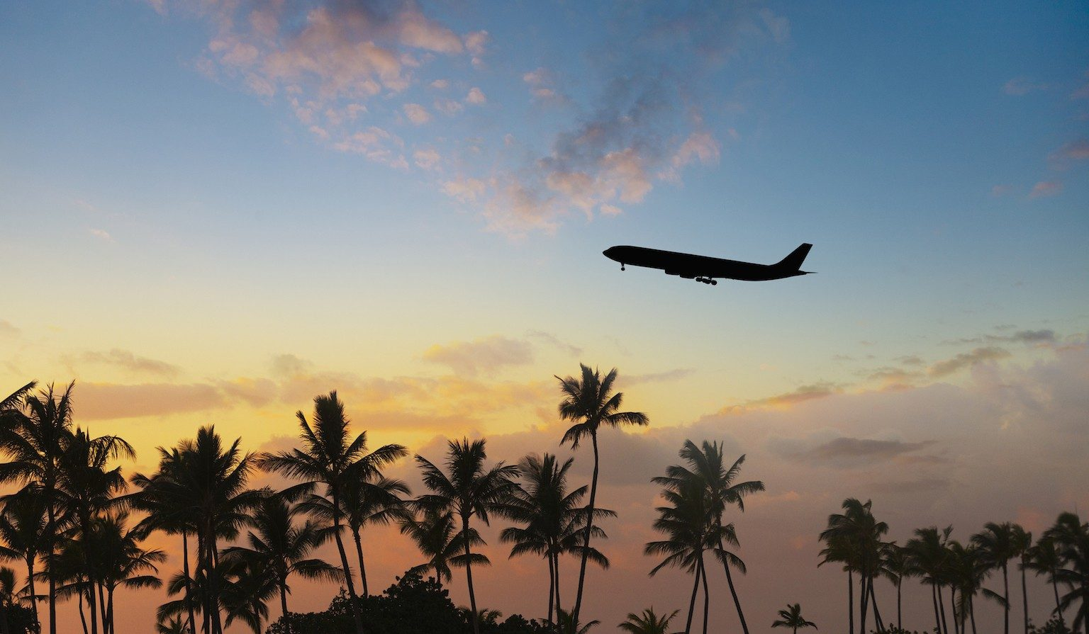 Plane flying over palm trees with sunset in the background.