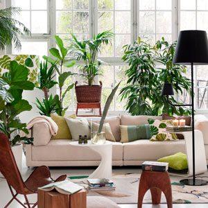 LivingroomFullofPlants_GettyImage_300x300