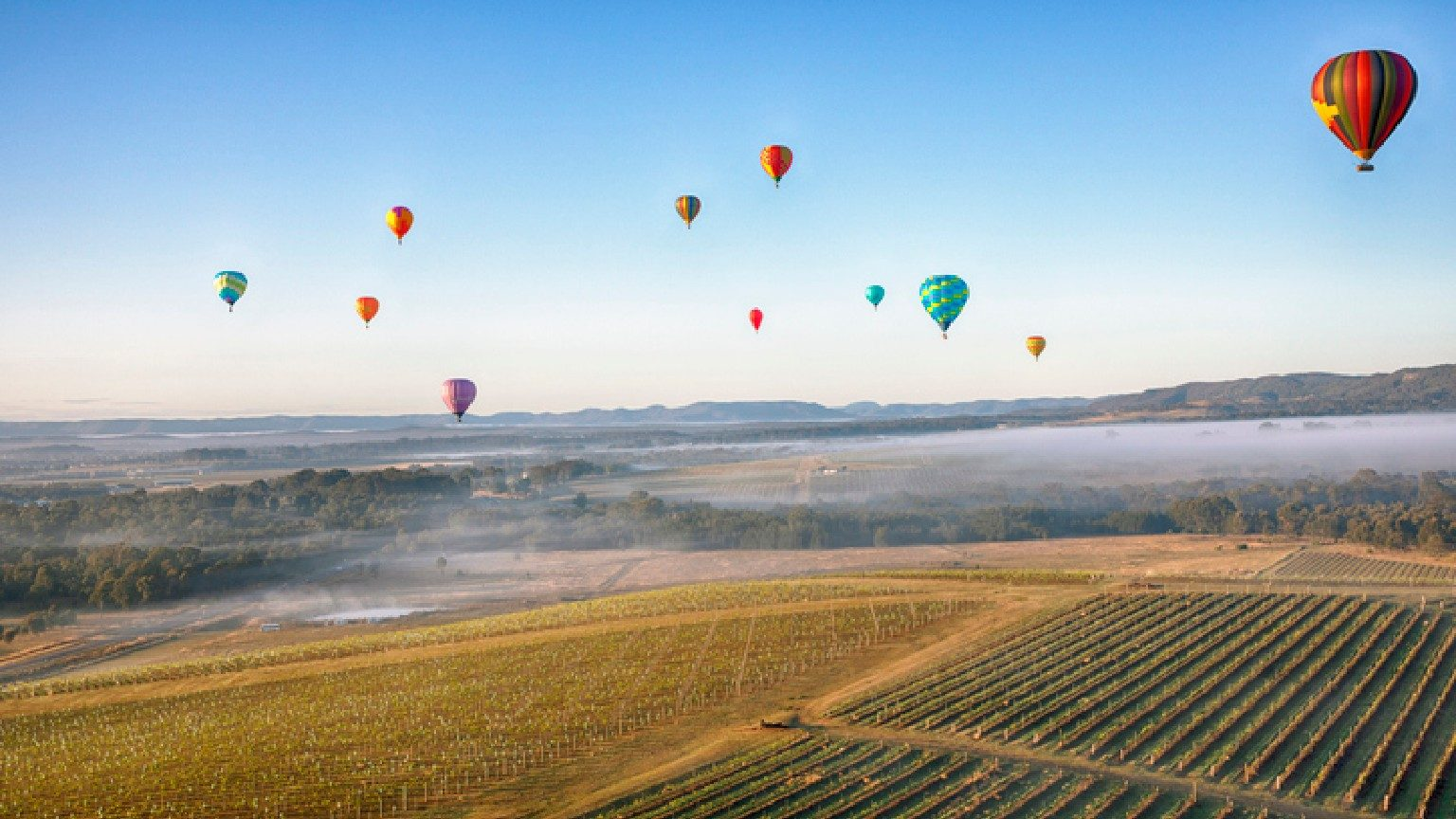 Hot air balloons in the Hunter Valley