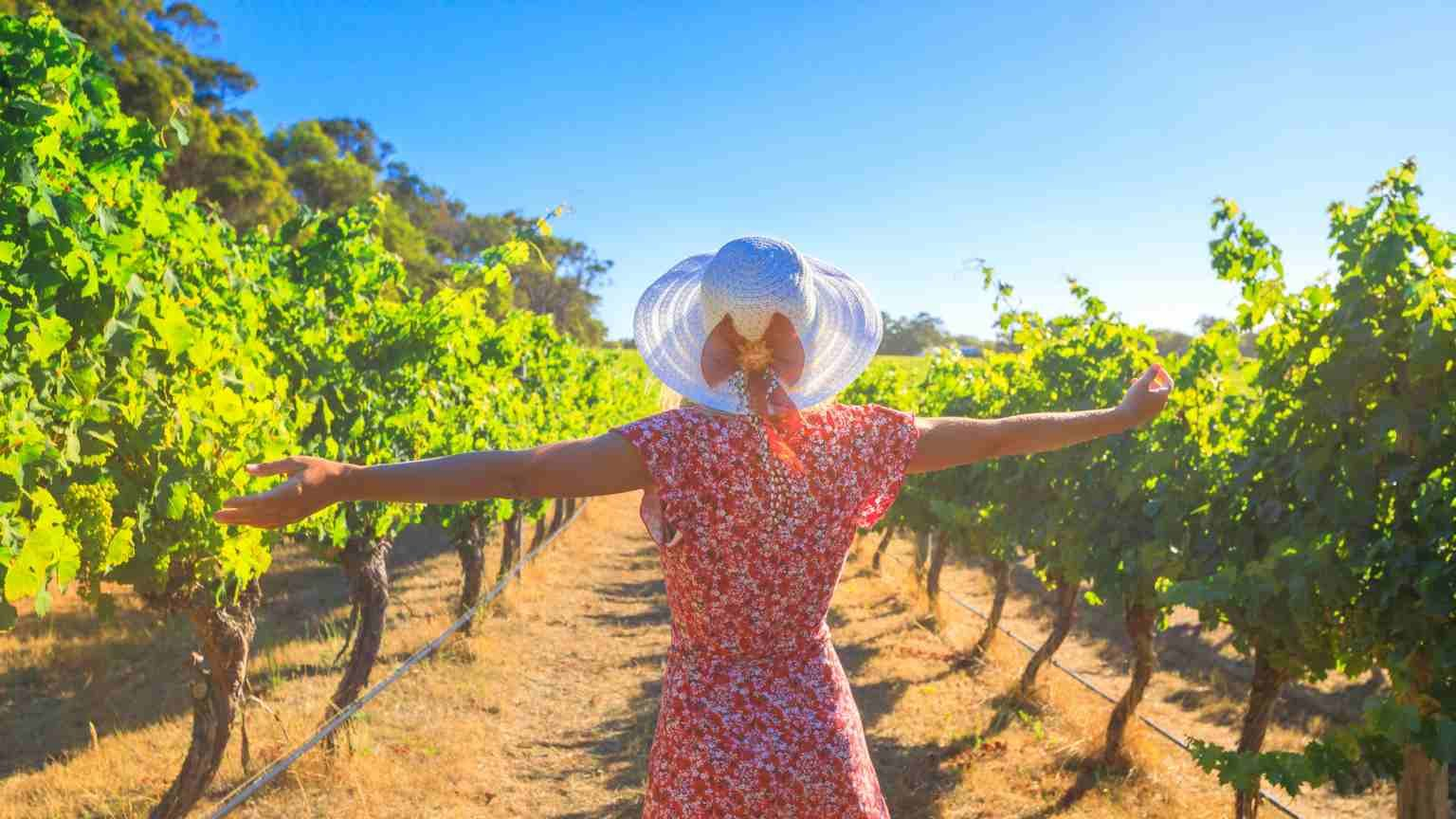 Australian vineyard. Carefree blonde woman with open arms among the rows of grapes, enjoys the harvest in Margaret River known as the wine region in Western Australia. (Australian vineyard. Carefree blonde woman with open arms among the rows of grapes