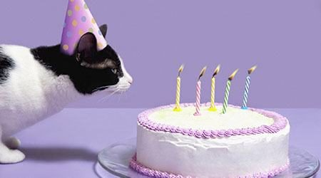Cat_Wearing_Birthday_Hat_GettyImages_450x250