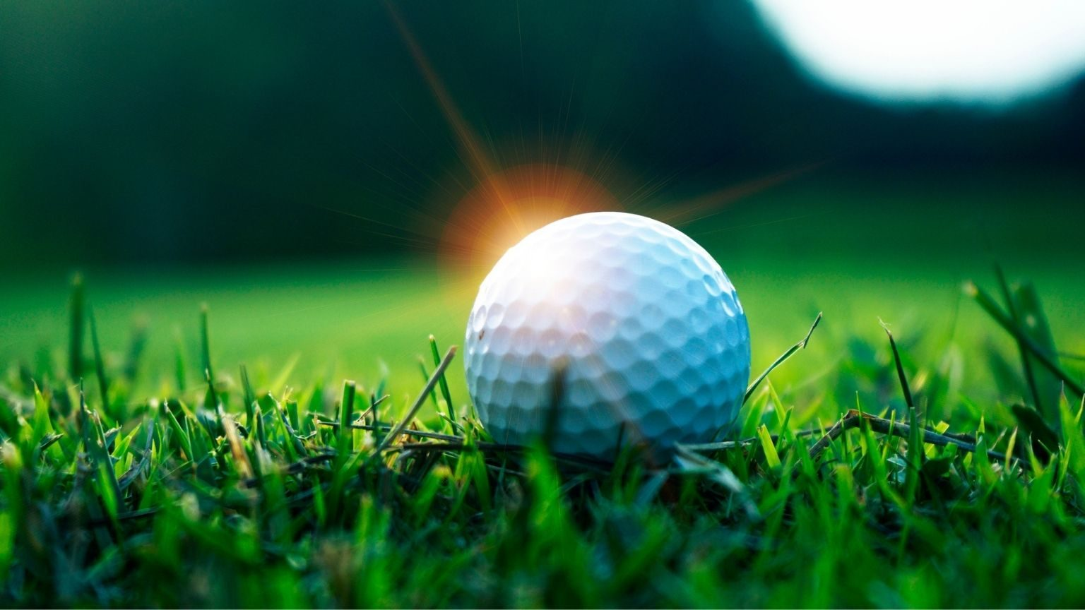 Close-Up Of Golf Ball On Course