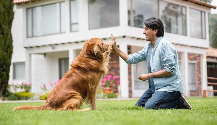 Comment démarrer une entreprise de dressage de chiens en Australie  | Dresser son chien