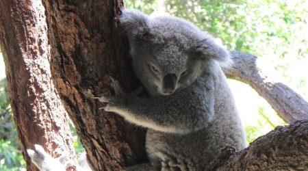 Taronga Zoo review