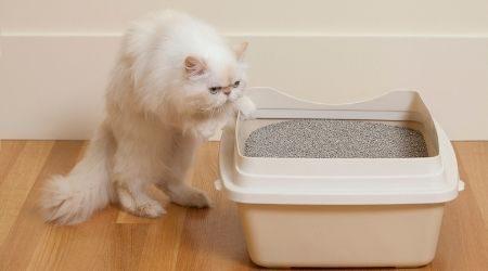 Best cat litter in Australia