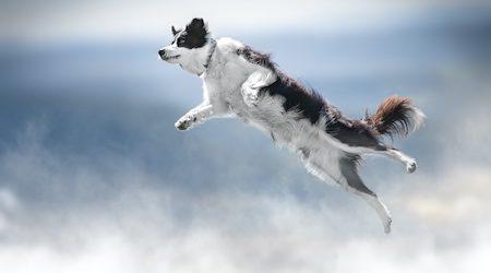 Mad Paws IPO: A pet-tacular debut
