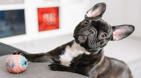 Your money or your pet? 17% of Australians would spend $10k to save their dog