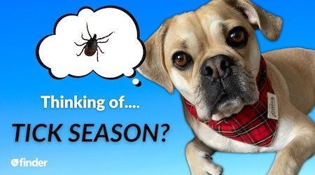 How to protect your beloved pet during 2021 tick season in Australia