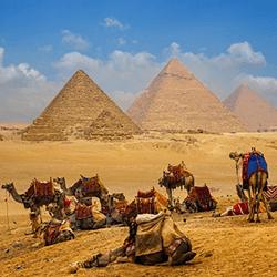 Camel caravan near the Egyptian pyramids