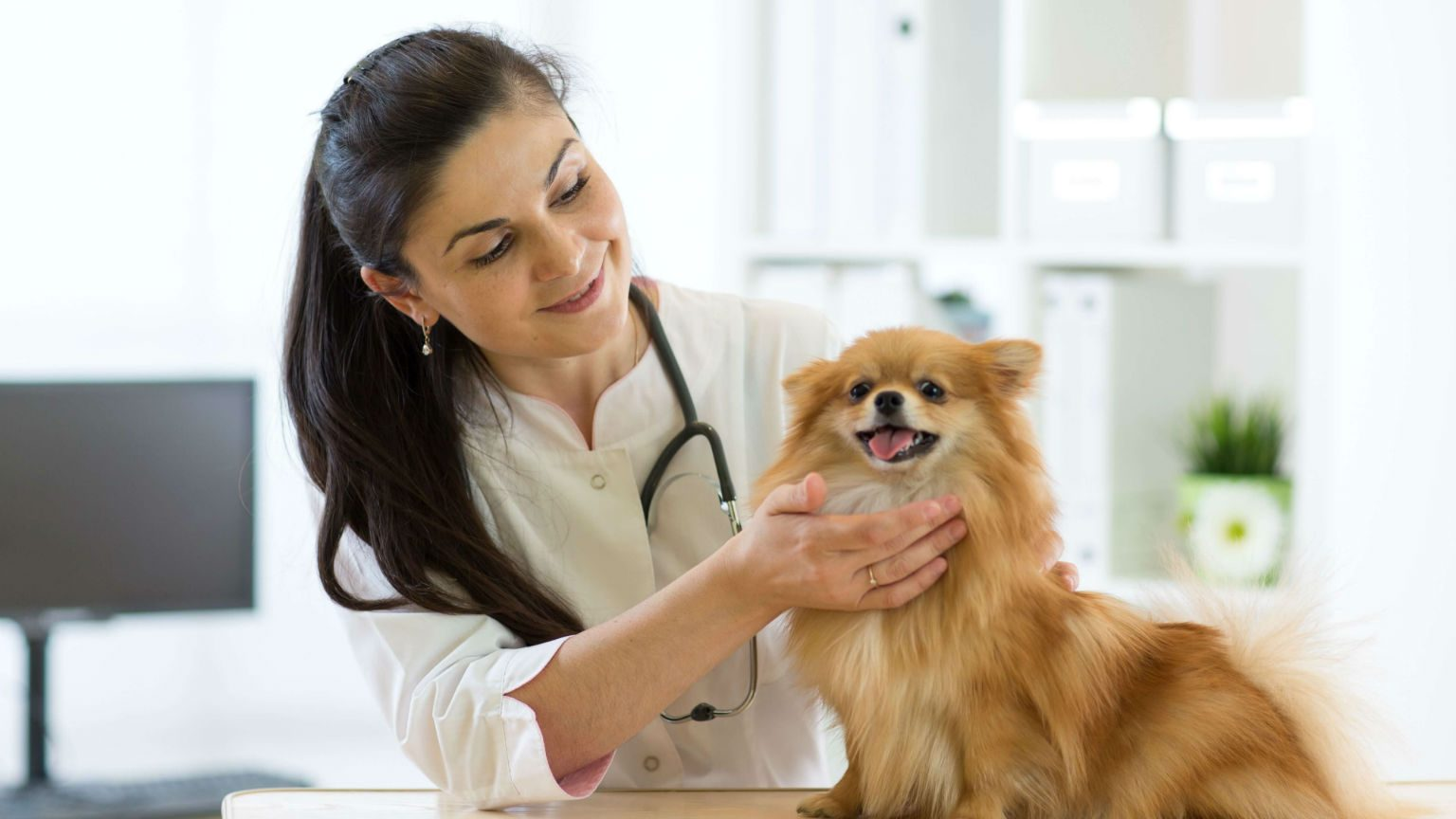 Vet with dog.