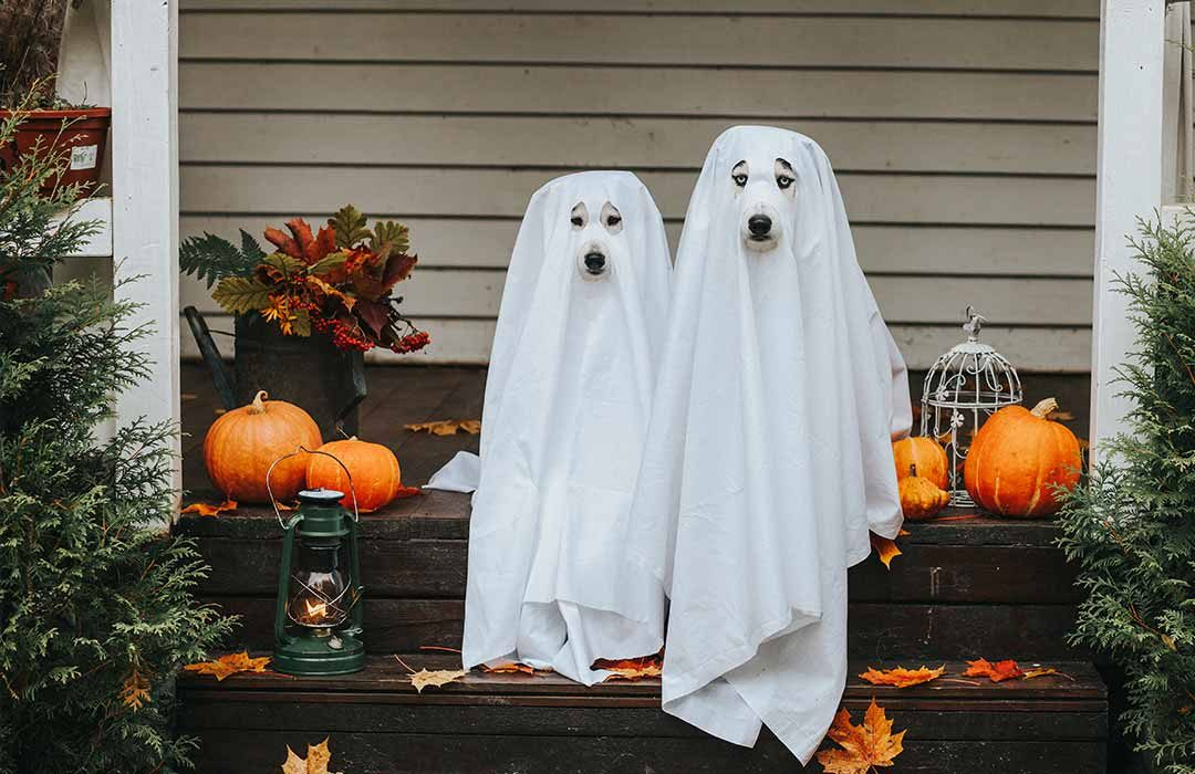 Halloween Dogs As Ghosts