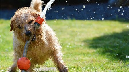 How to spot and treat heatstroke in dogs