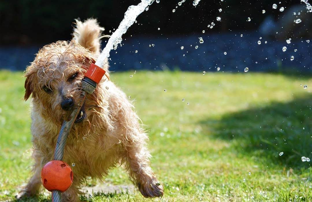 little dog playing with water stream