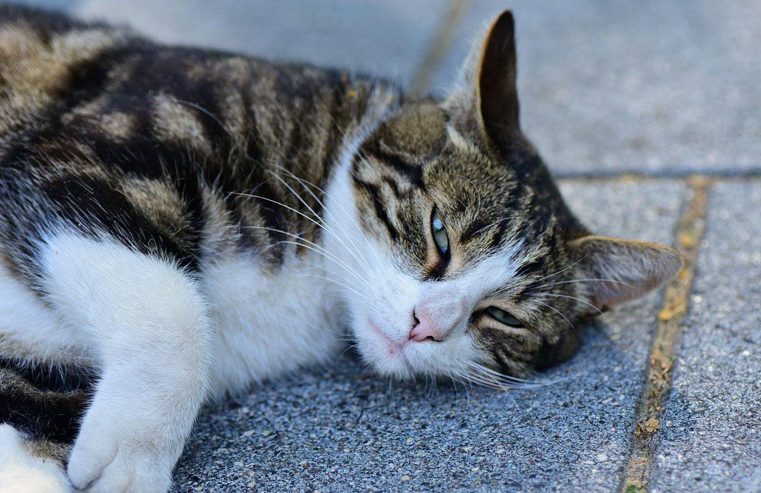 Sick cat on the street