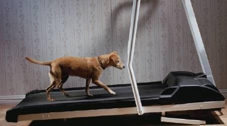 Where to buy treadmills online