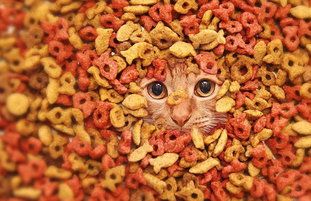 Kitty In Food