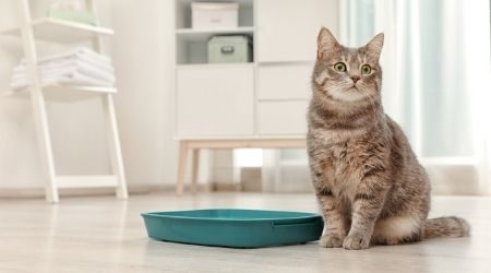 Where to buy cat litter online