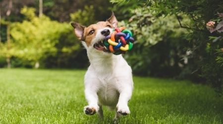 Amazon Prime Day pet deals 2021