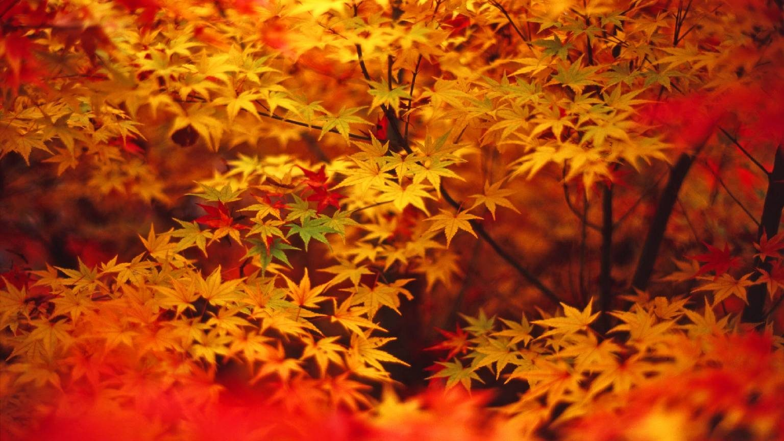 Colorful image of autumn leaves.
