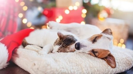 5 ways to keep your pet healthy and happy during the holidays