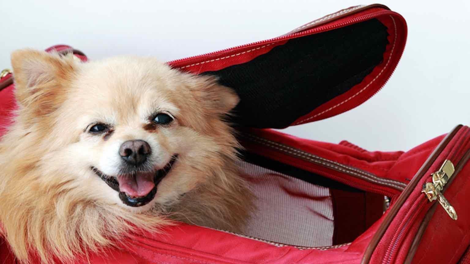 Cute dog in a pet carrier