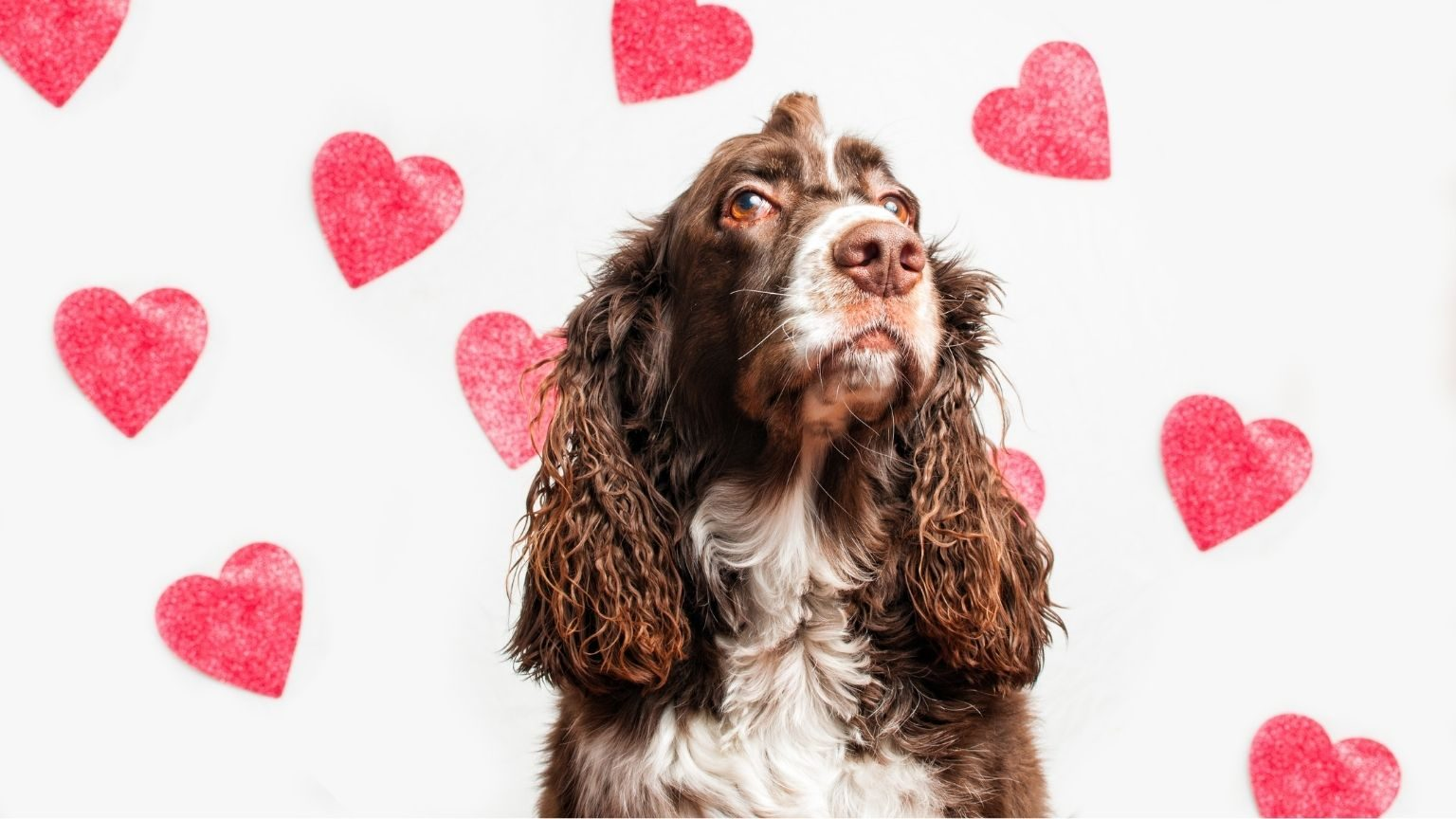 Dog with hearts in background