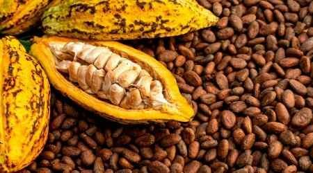 How to trade cocoa in Singapore